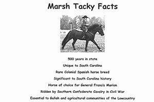 Marsh Tacky Facts